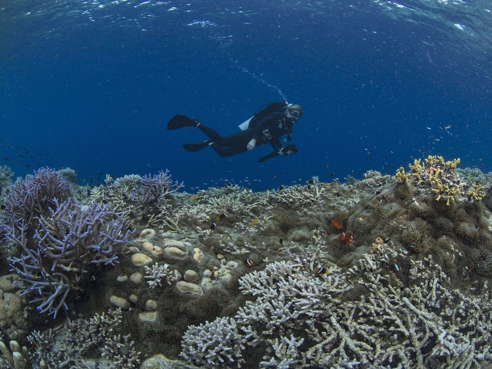17 - A diver takes in the reefscape CREDIT: The Ocean Agency / paul g. allen philanthropies