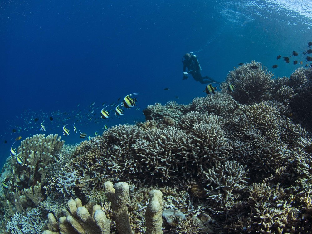 16 - The healthy reefs are teeming with life CREDIT: The Ocean Agency / paul g. allen philanthropies