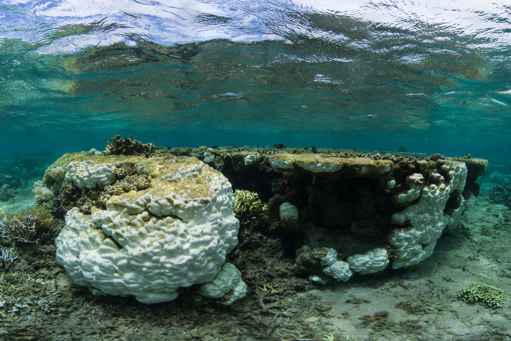 FIJI credit: the ocean agency / xl catlin seaview survey