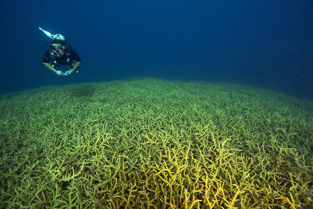 great barrier reef, australia credit: jayne Jenkins