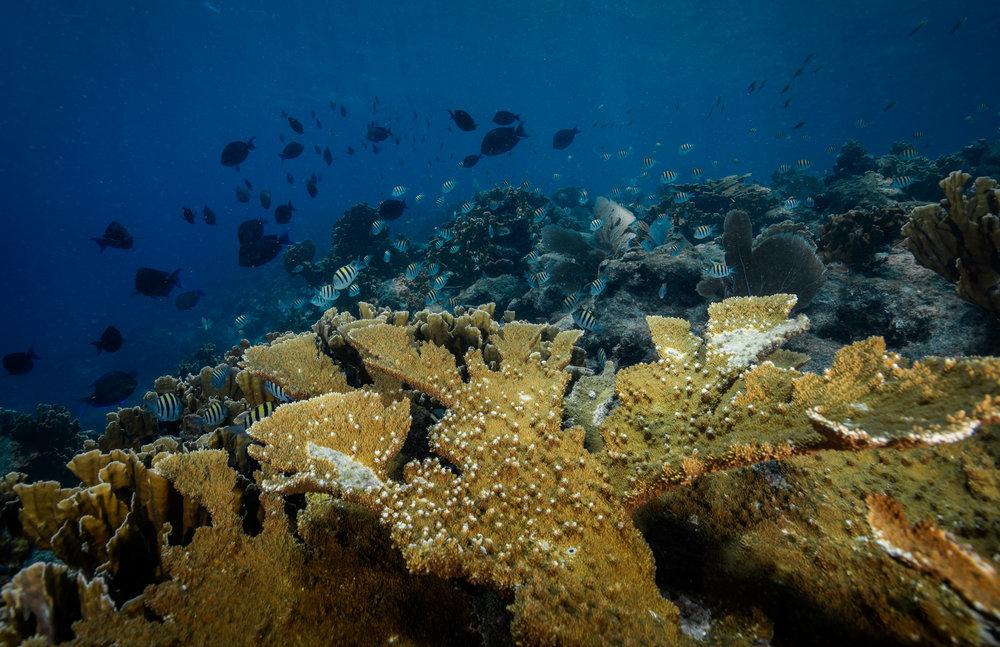 Scorpion Reef, MEXICO CREDIT: PHILIP HAMILTON