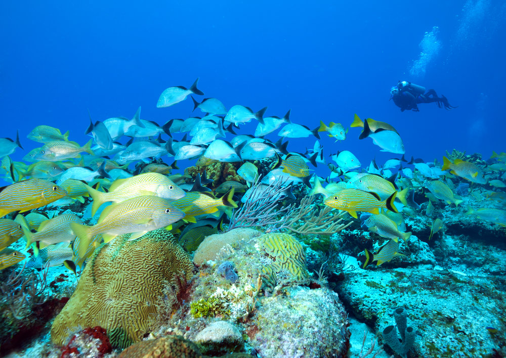 Palancar Reef - Cozumel CREDIT: JETT BRITNELL