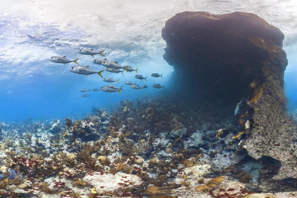 bermuda CREDIT: THE OCEAN AGENCY