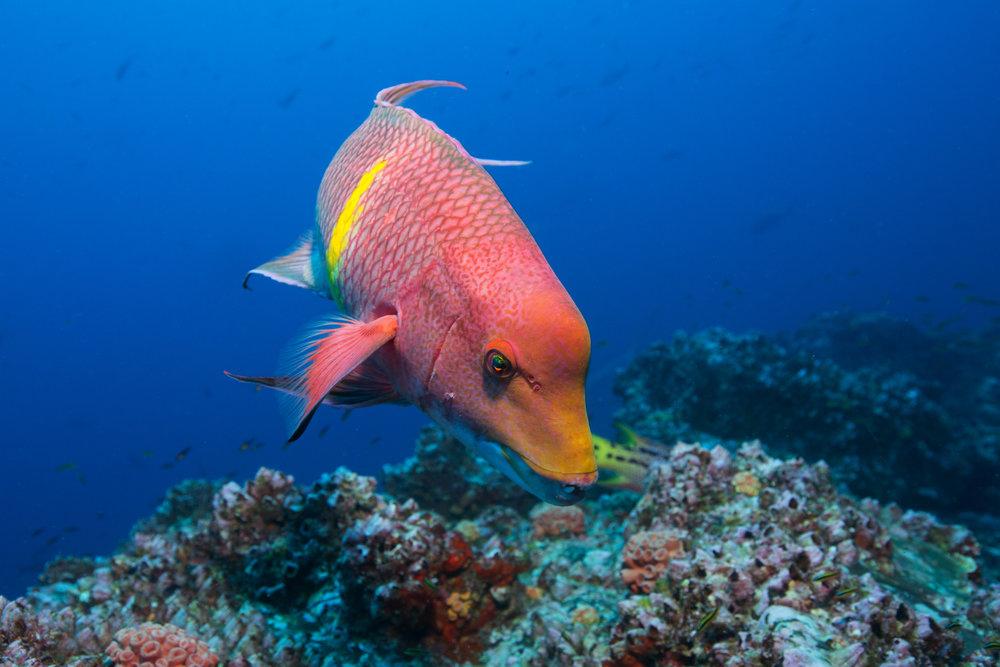 DOWNLOAD   - FISH IN COSTA RICA CREDIT: RICK MISKIV