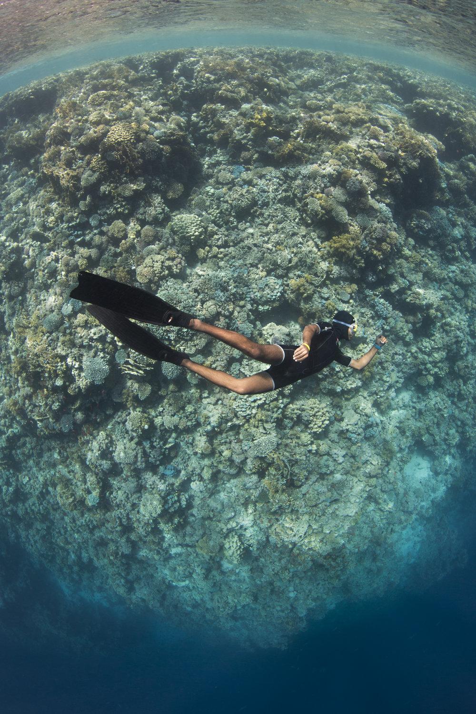 freeDIVER CREDIT: RENATA ROMEO/ coral reef image bank