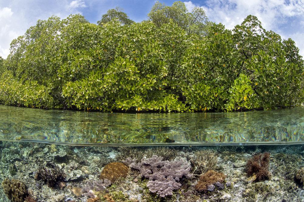 YANGGEFO ISLAND, RAJA AMPAT, INDONESIA CREDIT: ALEX MUSTARD / CORAL REEF IMAGE BANK