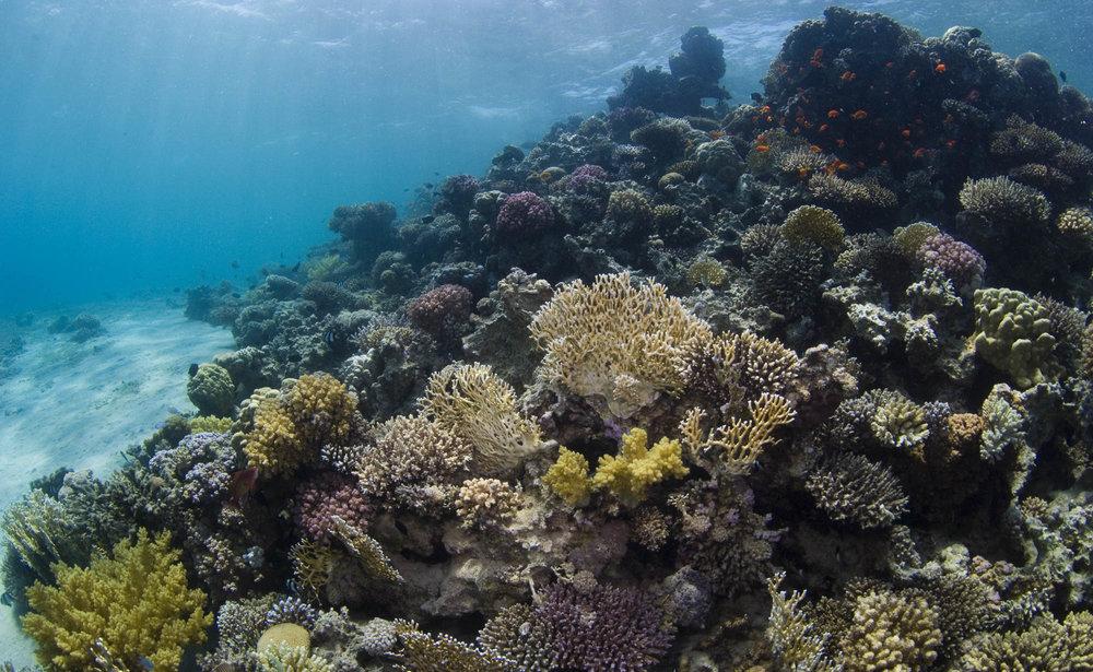 EGYPT CREDIT: WARREN BAVERSTOCK / coral reef image bank
