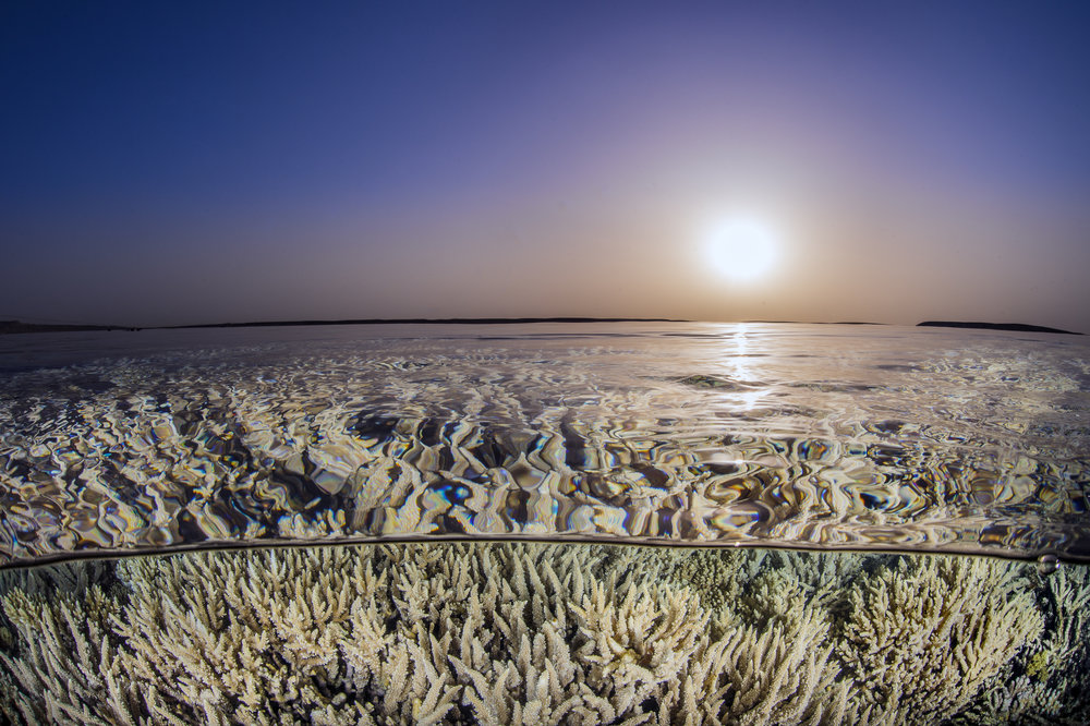 GUBAL ISLAND, EGYPT CREDIT: ALEX MUSTARD/ coral reef image bank