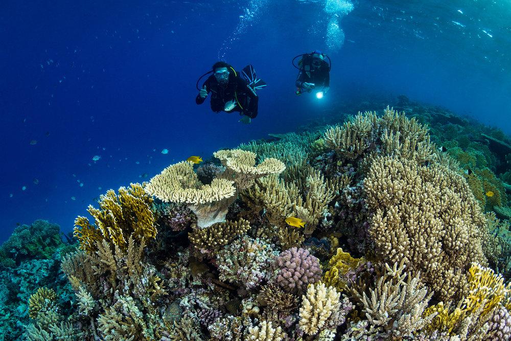 DAEDALUS, EGYPT CREDIT: FABRICE DUDENHOFER/ coral reef image bank