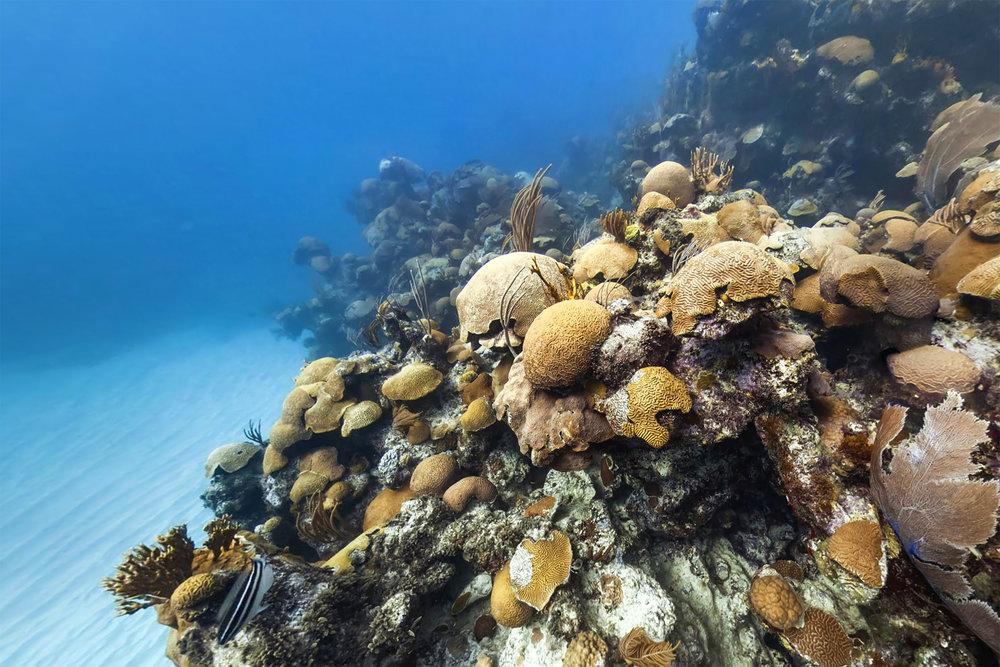 EMILY'S PINNACLES, BERMUDA CREDIT: THE OCEAN AGENCY / XL CATLIN SEAVIEW SURVEY