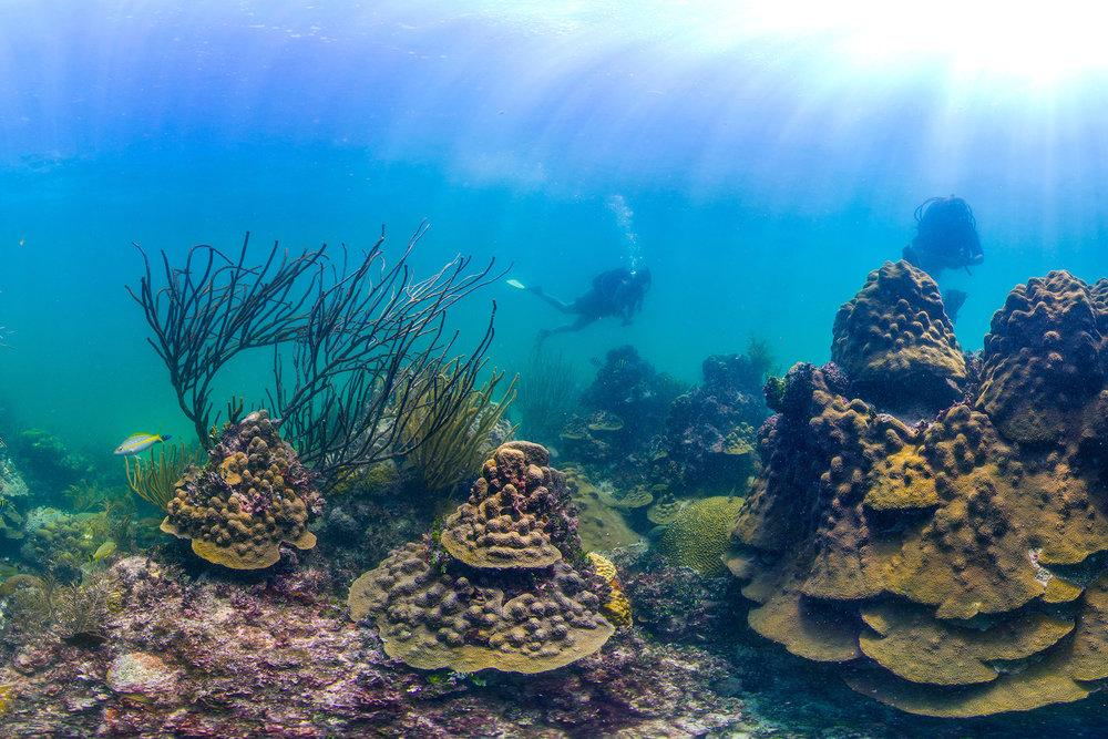 FLORIDA CREDIT: THE OCEAN AGENCY/ coral reef image bank