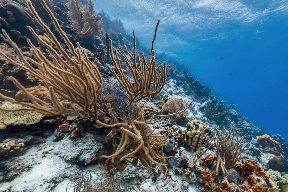 KLEIN BONAIRE, BONAIRE CREDIT: THE OCEAN AGENCY / XL CATLIN SEAVIEW SURVEY