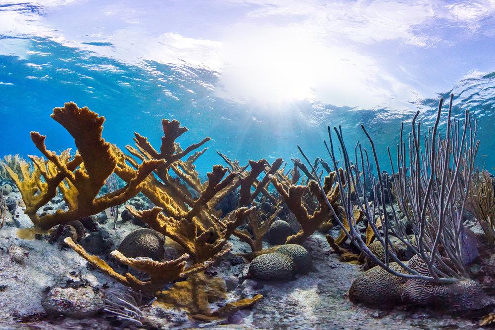 BUCK ISLAND REEF NATIONAL PARK, USVI CREDIT: THE OCEAN AGENCY / National park service