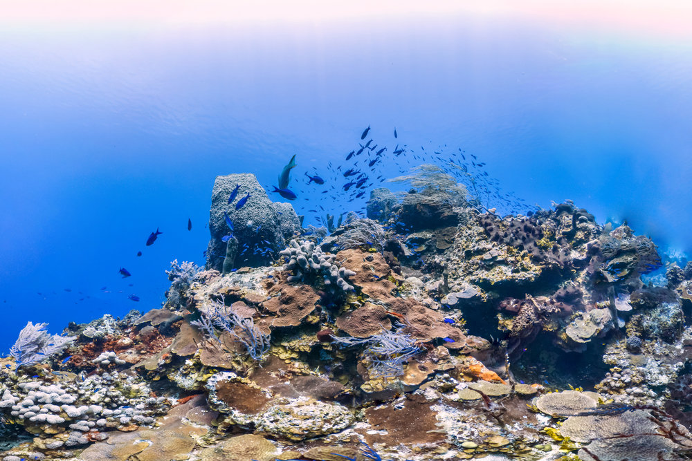 BAHAMAS CREDIT: THE OCEAN AGENCY/ coral reef image bank