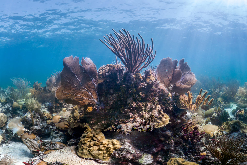 FLORIDA KEYS, USA CREDIT: THE OCEAN AGENCY / XL CATLIN SEAVIEW SURVEY