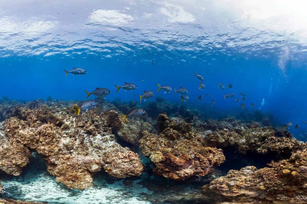 COZUMEL, MEXICO CREDIT: THE OCEAN AGENCY / XL CATLIN SEAVIEW SURVEY