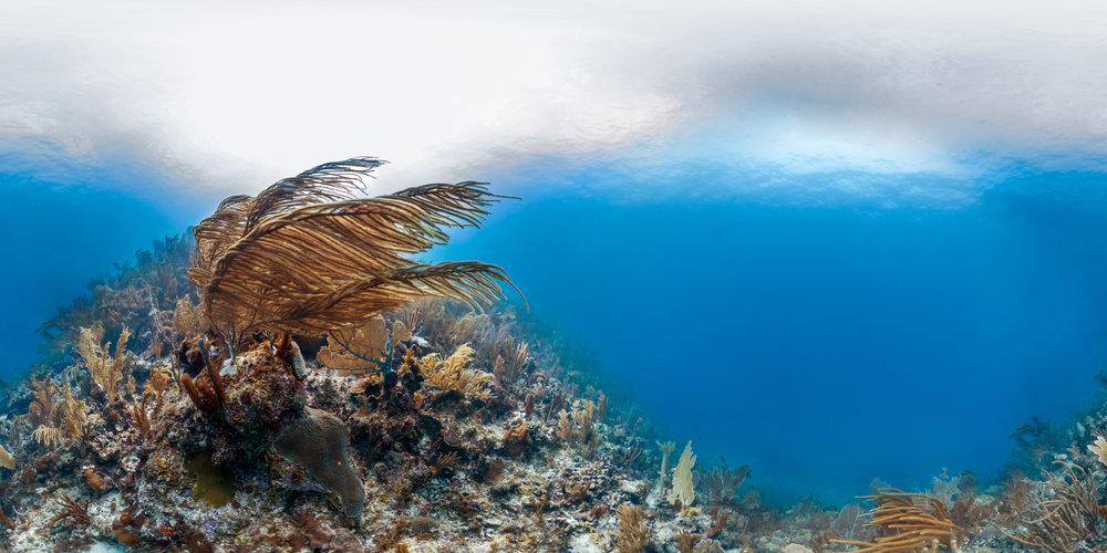 SHOAL BAY, ANGUILLA CREDIT: THE OCEAN AGENCY / XL CATLIN SEAVIEW SURVEY/ coral reef image bank