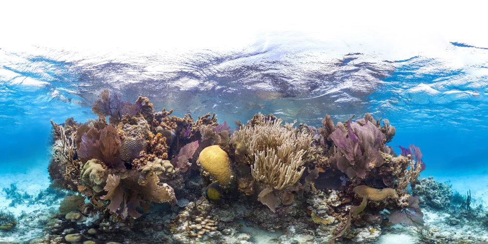 BELIZE CREDIT: THE OCEAN AGENCY / XL CATLIN SEAVIEW SURVEY