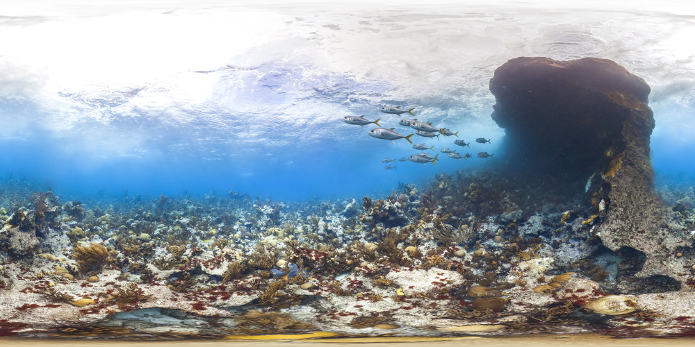 BERMUDA CREDIT: THE OCEAN AGENCY / XL CATLIN SEAVIEW SURVEY/ coral reef image bank