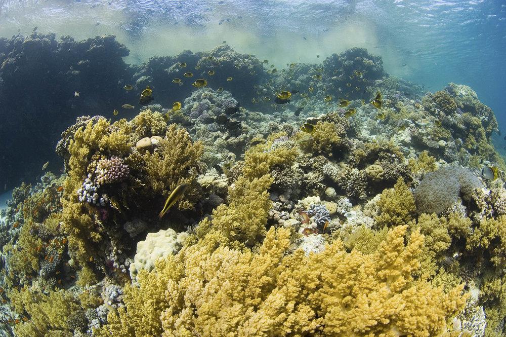 STRAITS OF TITAN CREDIT: WARREN BAVERSTOCK/ coral reef image bank