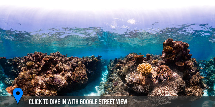 OSPREY REEF, GREAT BARRIER REEF CREDIT: THE OCEAN AGENCY / XL CATLIN SEAVIEW SURVEY/ CORAL REEF IMAGE BANK