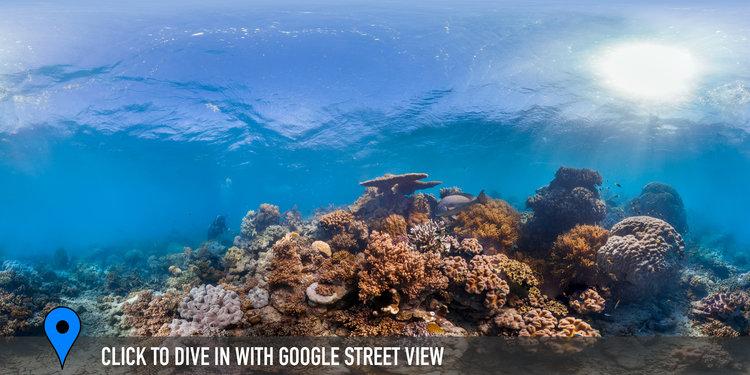 LIZARD ISLAND, GREAT BARRIER REEF CREDIT: THE OCEAN AGENCY / XL CATLIN SEAVIEW SURVEY/ CORAL REEF IMAGE BANK