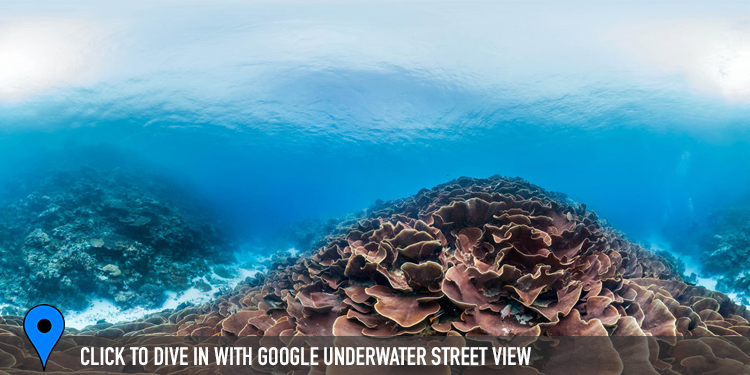 PALAU CREDIT: THE OCEAN AGENCY / CORAL REEF IMAGE BANK