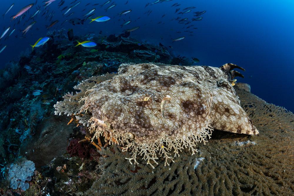RAJA AMPAT CREDIT: FABRICE DUDENHOFER / coral reef image bank