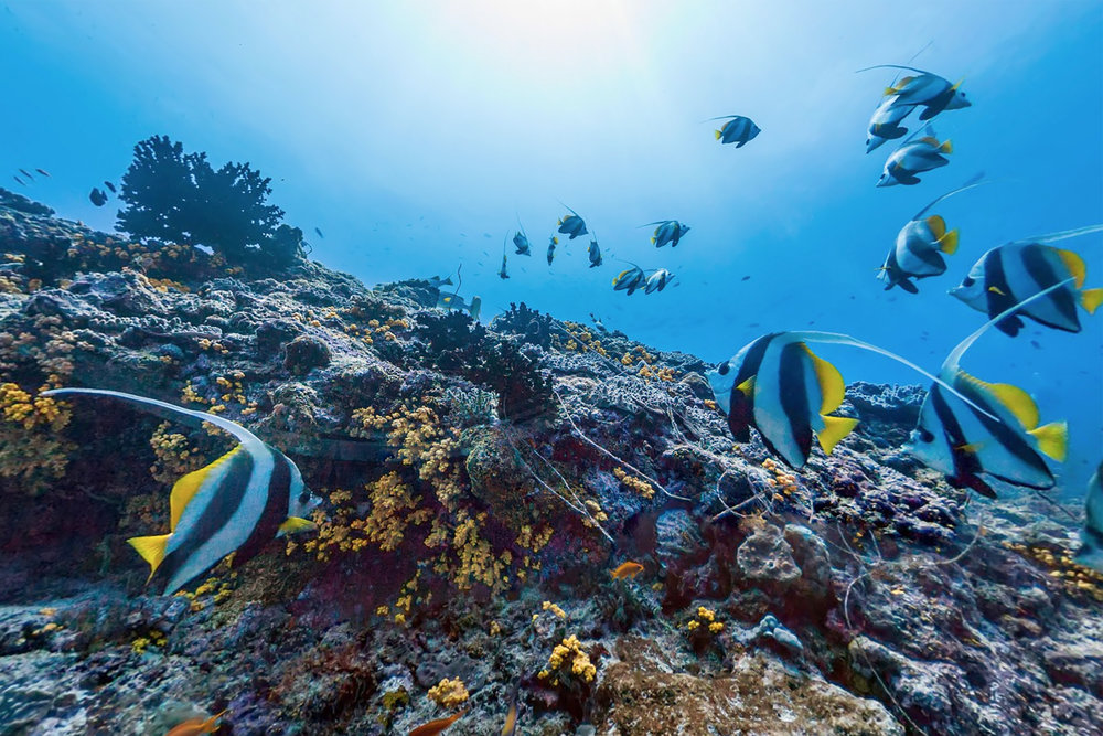muli kandu, maldives CREDIT: THE OCEAN AGENCY/ XLCSS