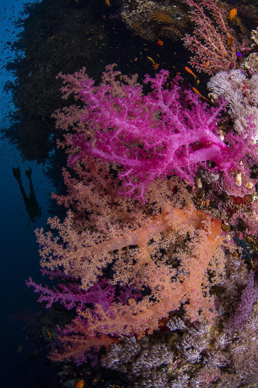 Yolanda Reef, Ras Mohamed National Park redit: renata romeo / coral reef image bank