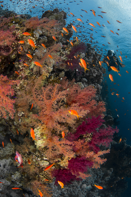 Jackson Reef Tiran Island credit: renata romeo/ coral reef image bank