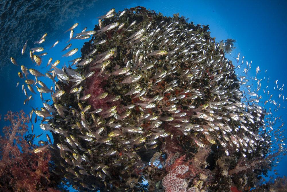 Ras Z'atar, Ras Mohamed National parck credit: renata romeo/ coral reef image bank