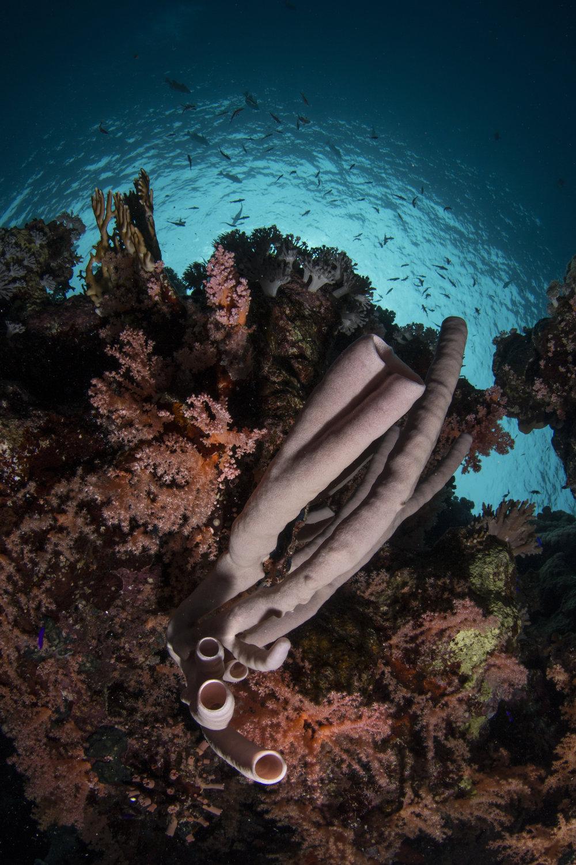 Ras Umm sid, Sharm el sheikh redit: renata romeo/ coral reef image bank