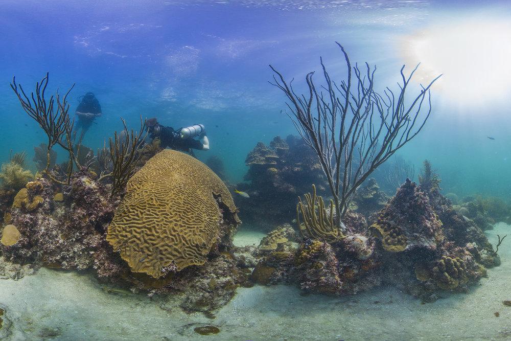 florida credit: THE OCEAN AGENCY / XL CATLIN SEAVIEW SURVEY