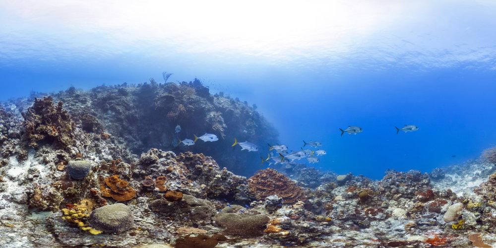 turks and caicos islands credit: CREDIT: THE OCEAN AGENCY / XL CATLIN SEAVIEW SURVEY