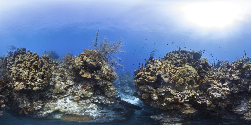 BELIZE CREDIT: THE OCEAN AGENCY / XL CATLIN SEAVIEW SURVEY/ CORAL REEF IMAGE BANK