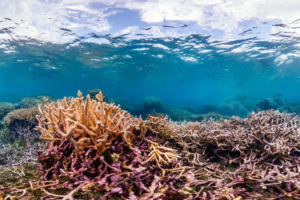 PAMLYRA ATOLL CREDIT: THE OCEAN AGENCY/ NOAA FISHERIES