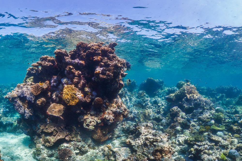 OPAL REEF, Great barrier reef CREDIT: THE OCEAN AGENCY / XL CATLIN SEAVIEW SURVEY