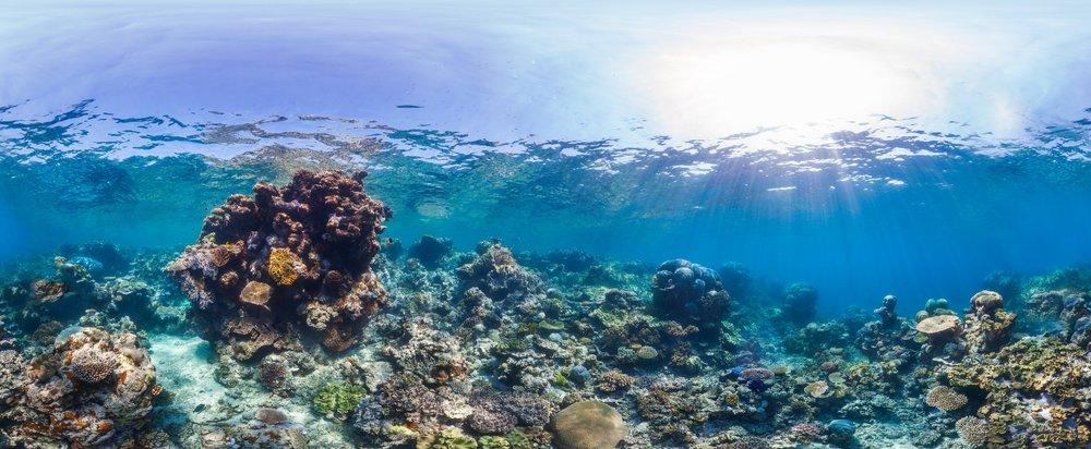 OPAL REEF, Great barrier reef CREDIT: THE OCEAN AGENCY / XL CATLIN SEAVIEW SURVEY/ CORAL REEF IMAGE BANK