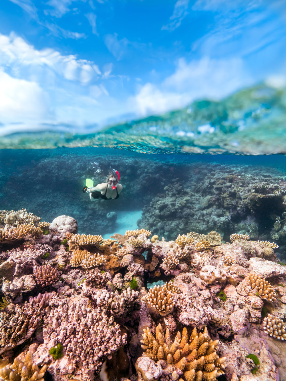 snorkeler on reef credit: mark fitz