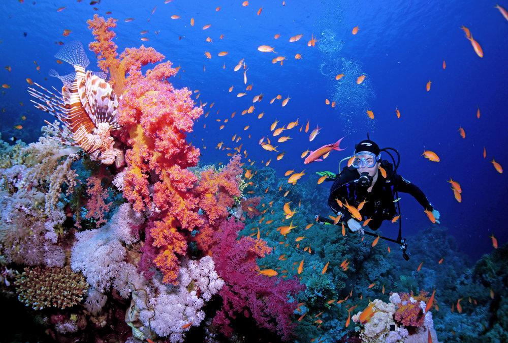 diver on reef CRedit: Cinzia Osele Bismarck / coral reef image bank