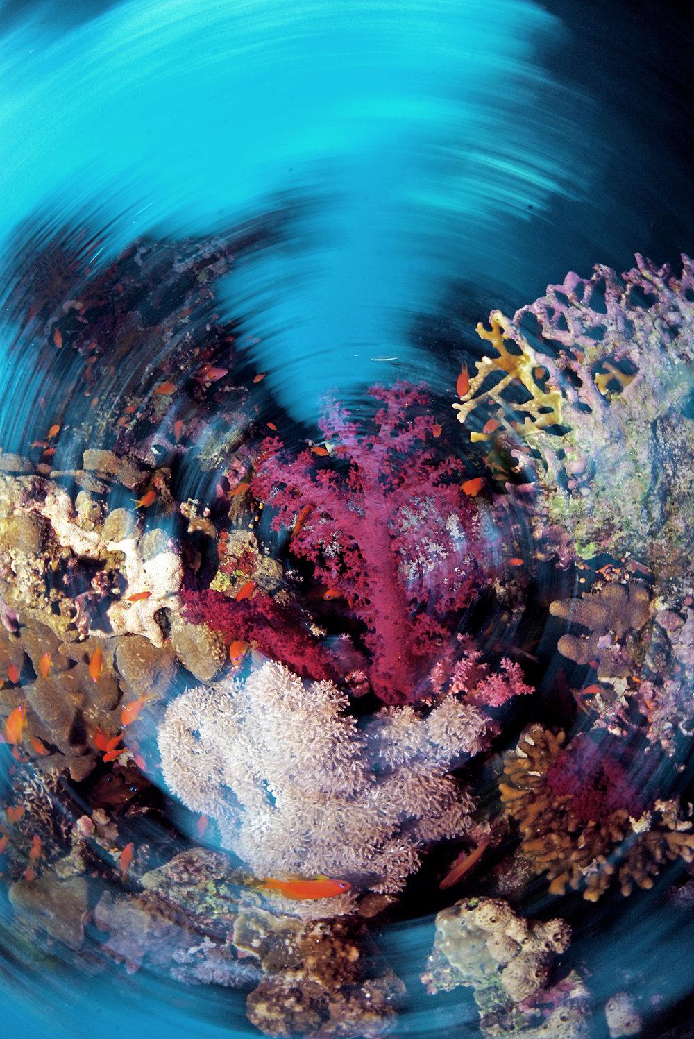 spinning corals CRedit: Cinzia Osele Bismarck / coral reef image bank