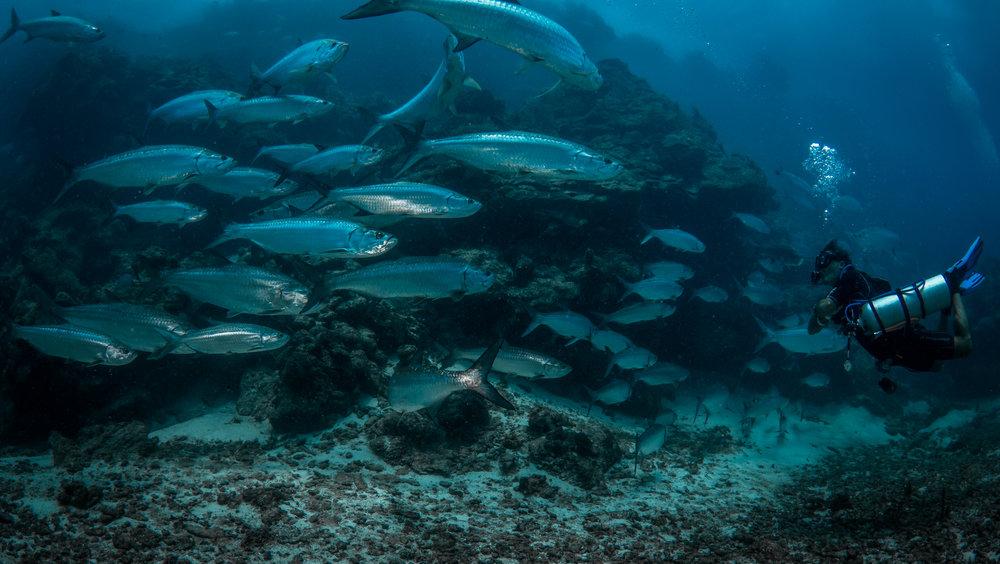 Quintana Roo, Mexico CREDIT: PHILIP HAMILTON/ CORAL REEF IMAGE BANK