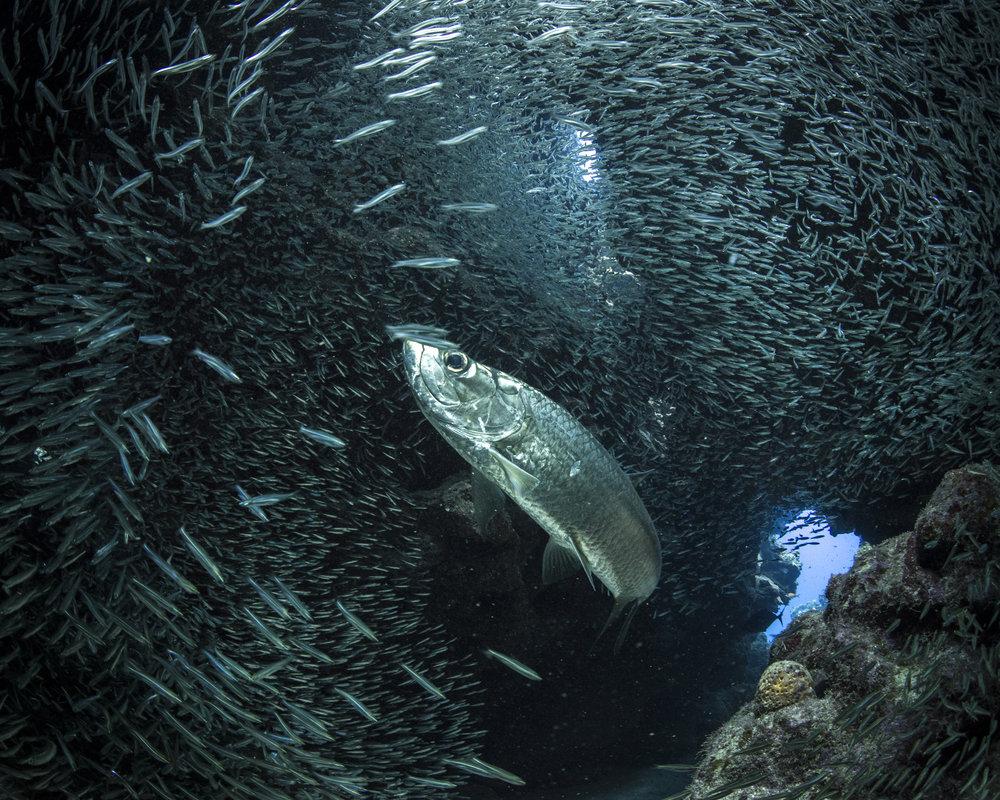 grand cayman CREDIT: Ellen Cuylaerts/ coral reef image bank