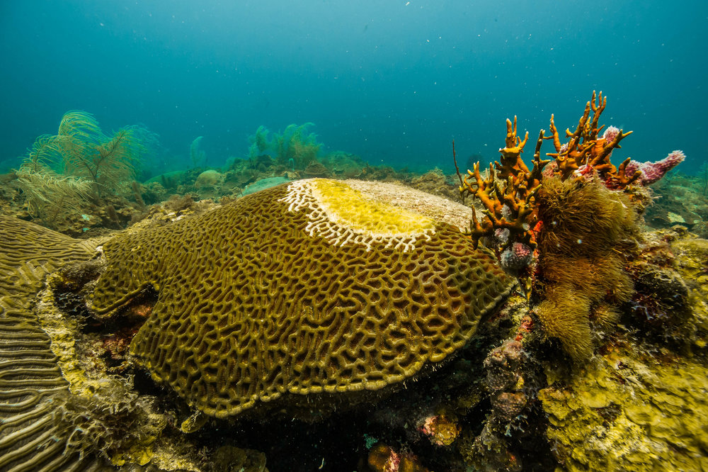 Dry Tortugas NAtional park credit: Shaun Wolfe / coral reef image bank