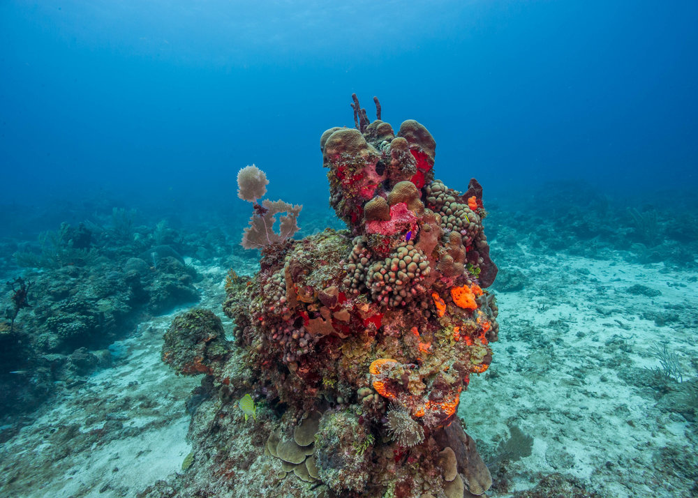 BISCAYNE NATIONAL PARK CREDIT: SHAUN WOLFE / coral reef image bank