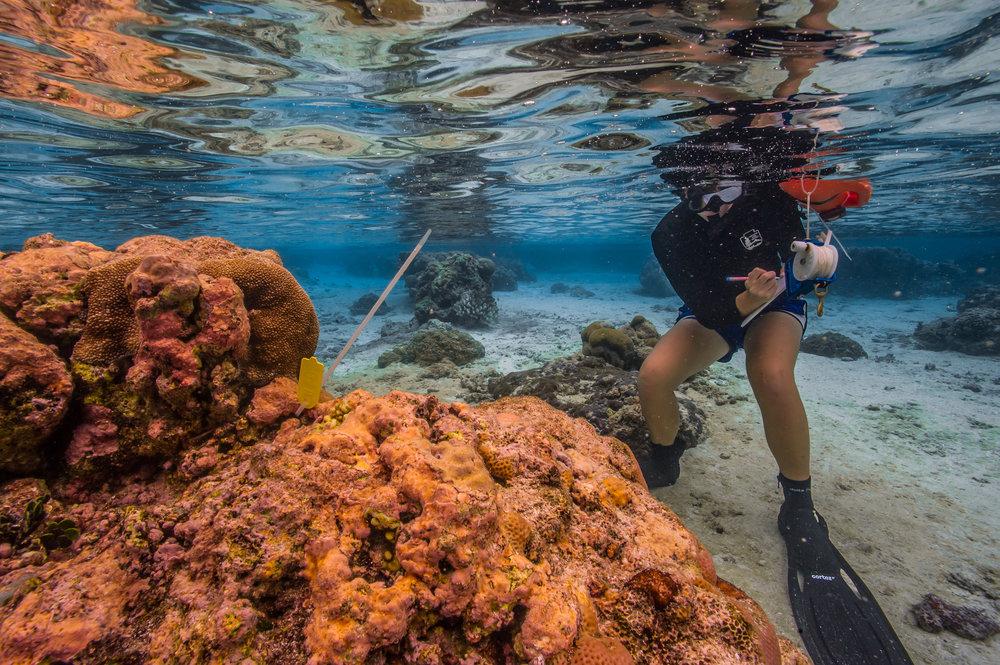florida keys national park credit: shaun wolfe/ coral reef image bank
