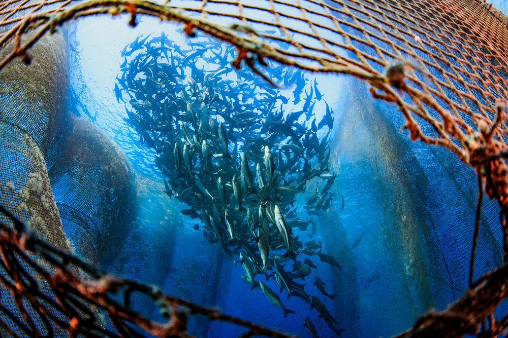 liouciou, taiwan credit: yen-yi lee / coral reef image bank