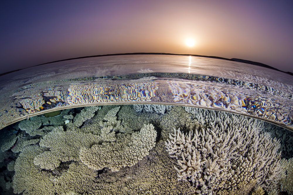 09 - a reef in GUBAL ISLAND, EGYPT credit: alex mustard / coral reef image bank
