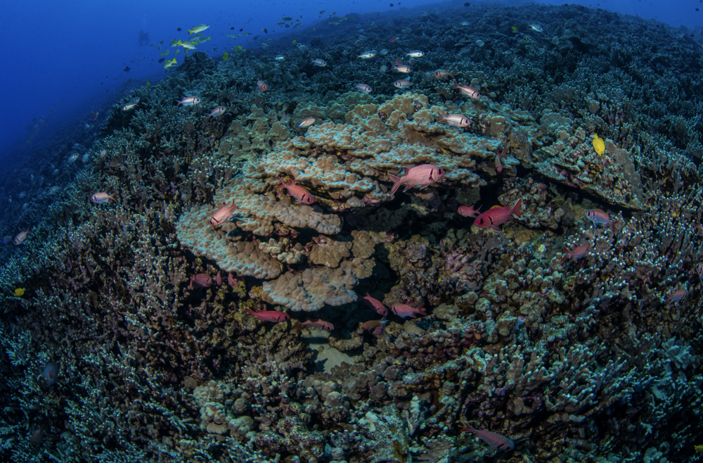coral reef, wide angle credit: kimberly jeffries / CORAL REEF IMAGE BANK